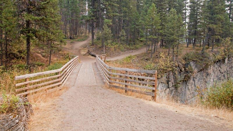 Träbro över ängliten vikklyftan för att fotvandra och hästryggemballageslinga i det Bob Marshall Wilderness området i Montana USA arkivbild
