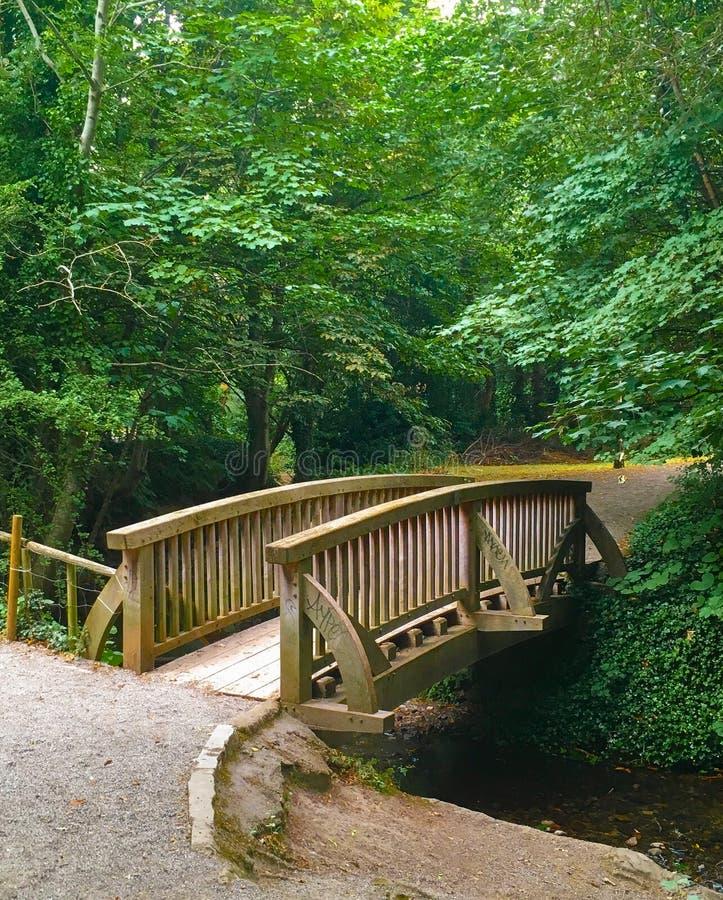 Träbro över den lilla floden arkivbild