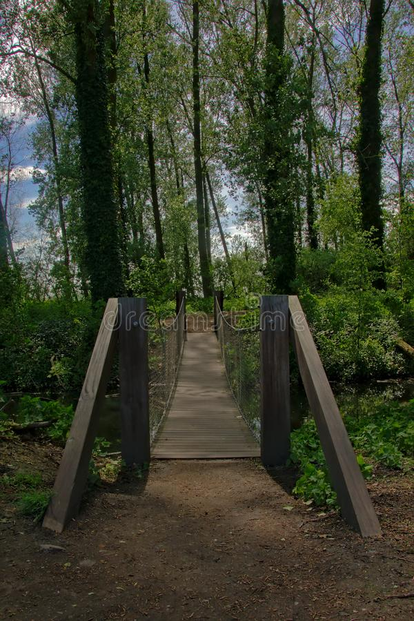 Träbro över en ditchin en frodig grön vårskog, frontal sikt royaltyfri fotografi