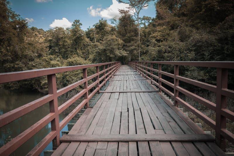Träbro över floden som leder till skog- och himmelbakgrund royaltyfria foton