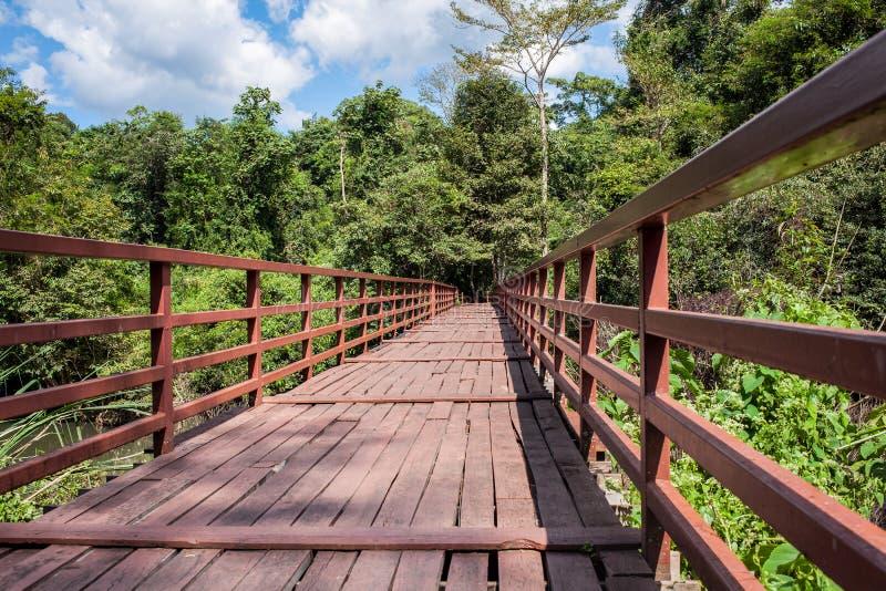 Träbro över floden som leder till skog- och himmelbakgrund royaltyfri fotografi