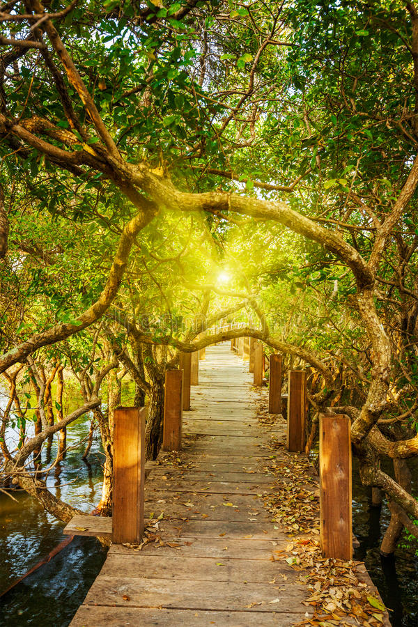 Träbro i översvämmad regnskogdjungel royaltyfri foto