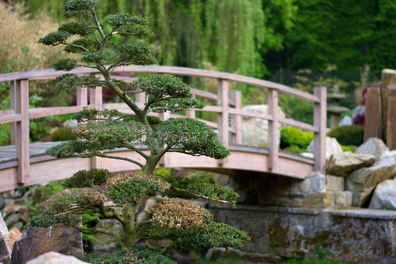 Träbro i den japanska trädgården royaltyfri fotografi