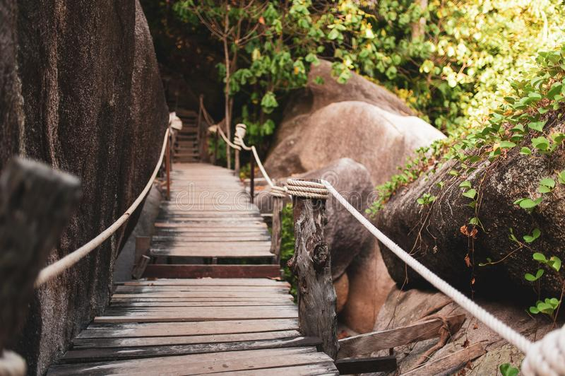 Träbro i djungeln - similan öar, Thailand arkivfoton