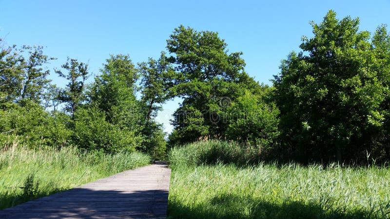 Träbro med gröna sidor och blå himmel royaltyfria foton