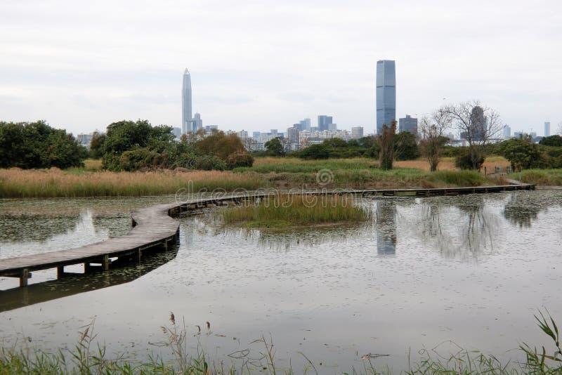 Träbro på Mai Po Nature Reserve på Hong Kong fotografering för bildbyråer