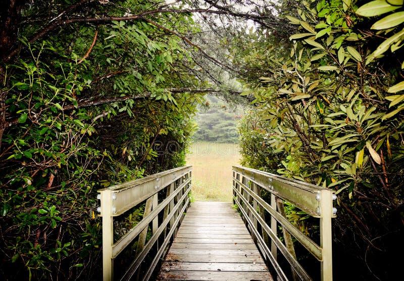 Träbro som korsar till en öppen äng royaltyfri fotografi