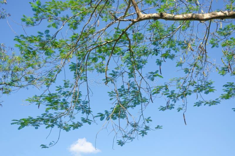 Trädöverkanten förgrena sig mot himlen royaltyfria bilder