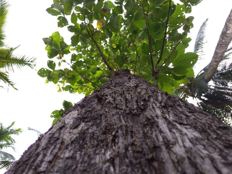 Träd är enorma royaltyfria foton