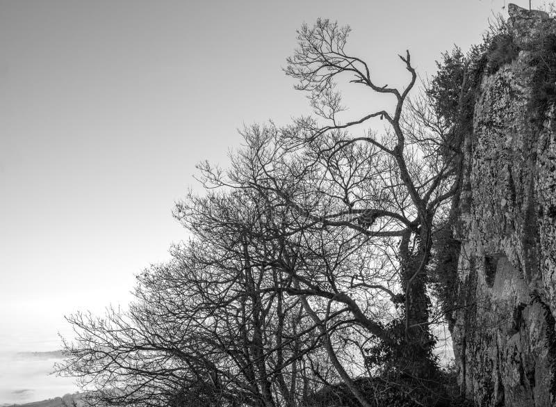 Träd överst av berget royaltyfria bilder