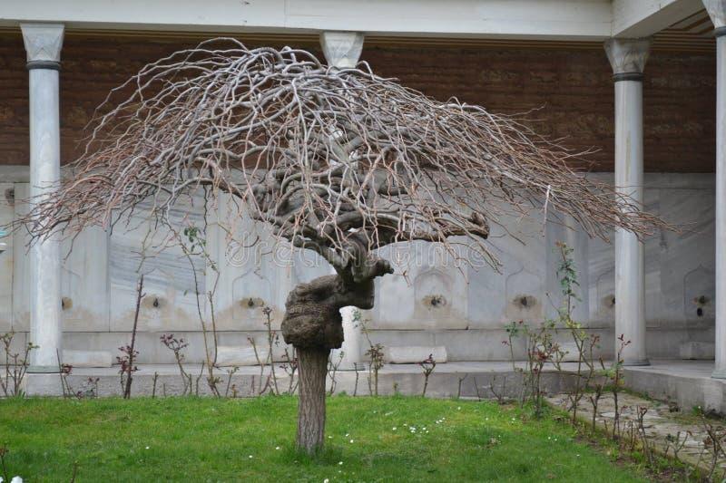 Träd av insikten arkivbild
