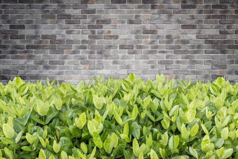 Download Träd Av Ixora Tropisk Blomma I Trädgårds- Garnering- Och Stenwa Fotografering för Bildbyråer - Bild av växt, tillväxt: 76701075
