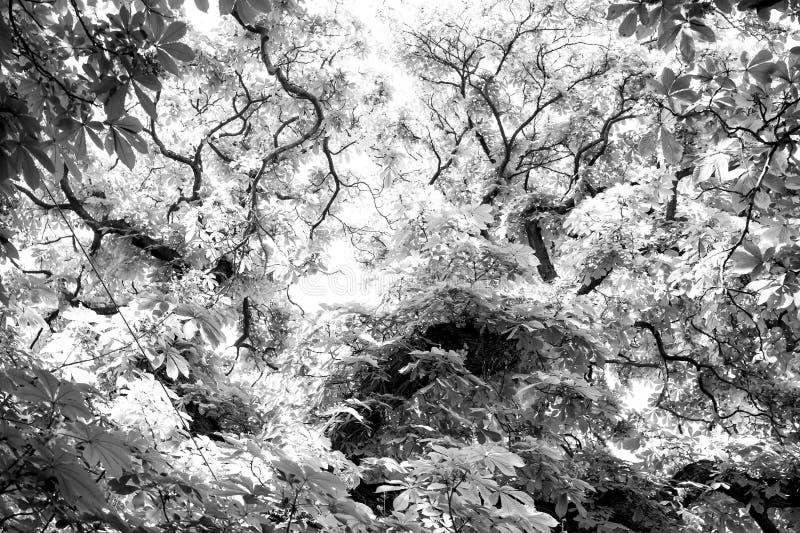 Träd av kastanjen med gräsplansidor i Prague, Tjeckien arkivbild