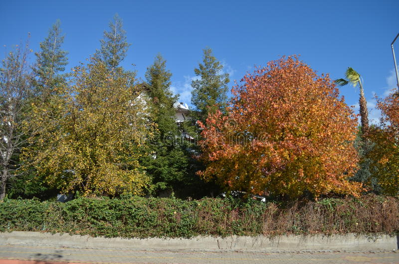 Träd av olika färger i höstkalkon arkivbild