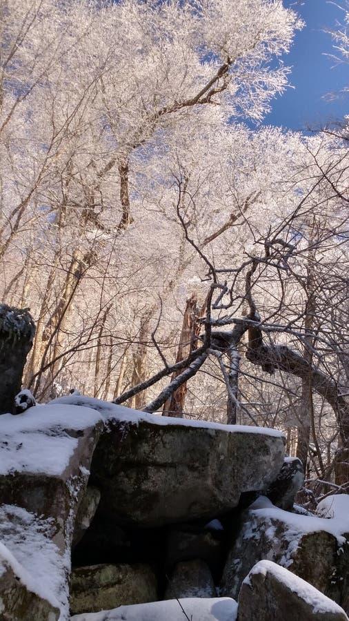 Träd av Tennessee royaltyfri foto