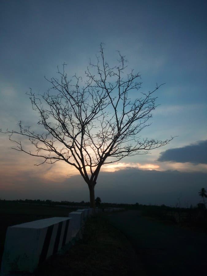 Träd av tomhet arkivfoton
