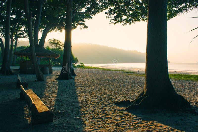 Träd, bänk och en koja på stranden royaltyfri bild