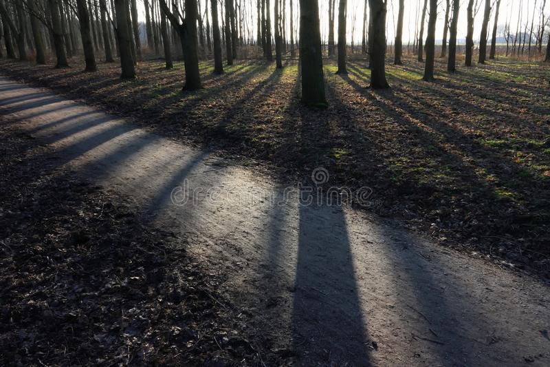 Träd backlit med starka långa skuggor royaltyfri foto