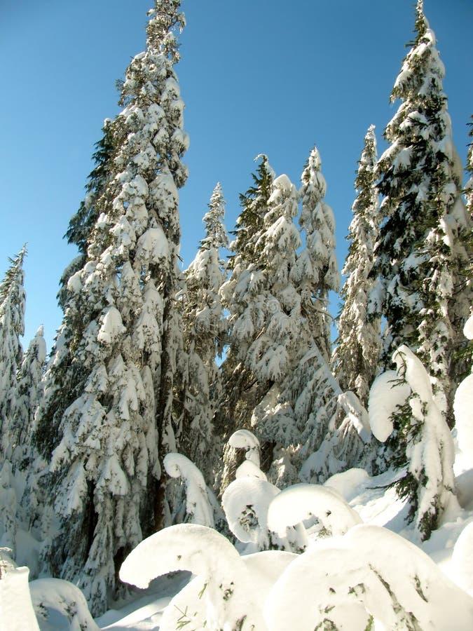 Träd bakade ihop med snö mot en klar blå himmel på lutningarna av monteringen Seymour royaltyfria bilder