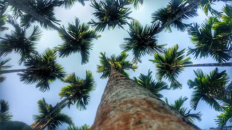 träd blad, himmel, natur arkivfoton