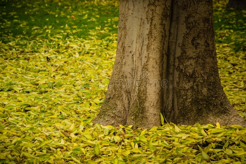 Träd bland lövverket i höst i El Retiro i Madrid arkivbild