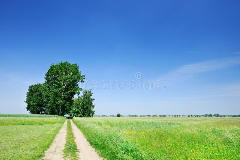 Träd bredvid en lantlig vägspring bland gröna fält arkivbild