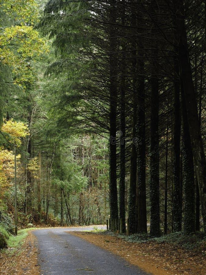 Träd bredvid vägen fotografering för bildbyråer