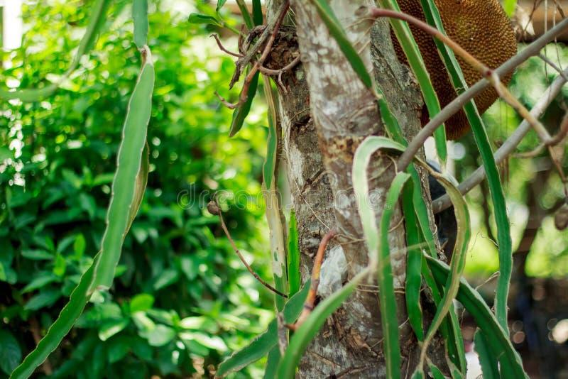 Träd Chiangmai Thailand arkivfoto