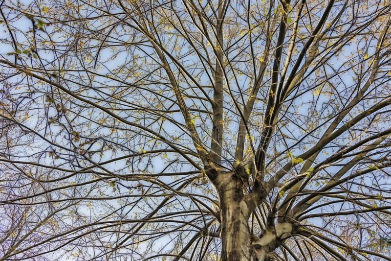 Träd den mest härliga gåvan av naturen Tr?d i gr?n natur arkivfoton
