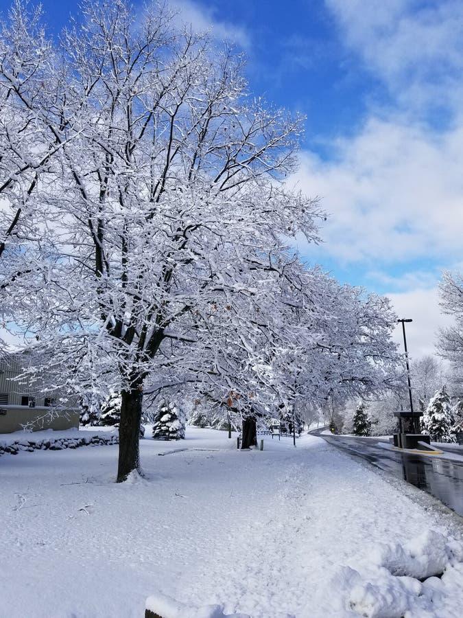 Träd efter snöstorm arkivbild