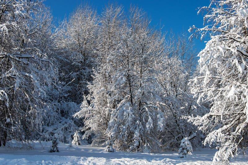 Träd efter tungt snöfall fotografering för bildbyråer