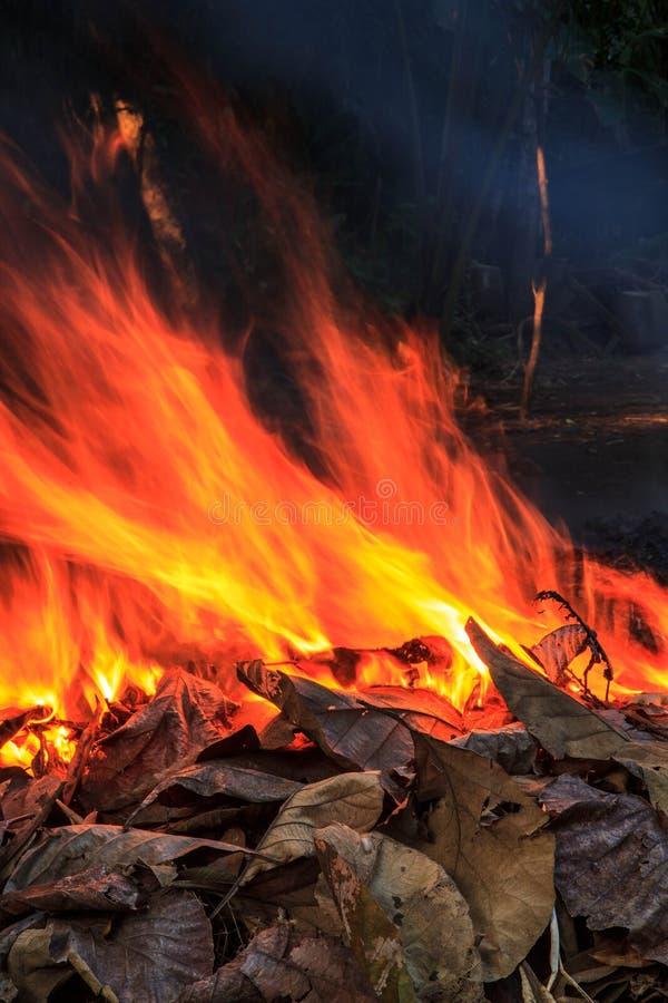 Träd för brandljusrök royaltyfri foto