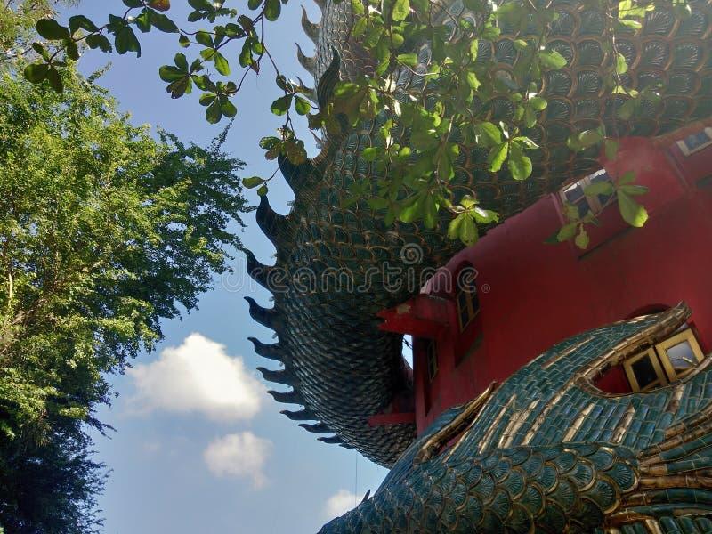 Träd för Dragon Buddha porslintempel royaltyfria foton