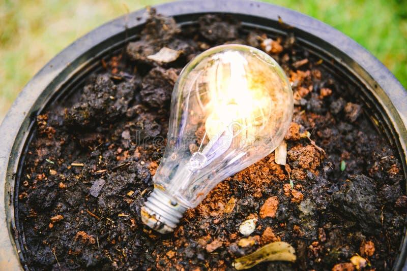 Träd för Eco begreppsidé och abstrakt begrepplightbulb arkivbild