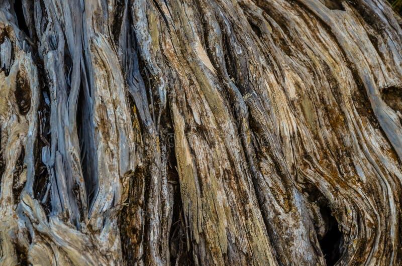 Träd för en för stamtextur knotigt arkivfoto