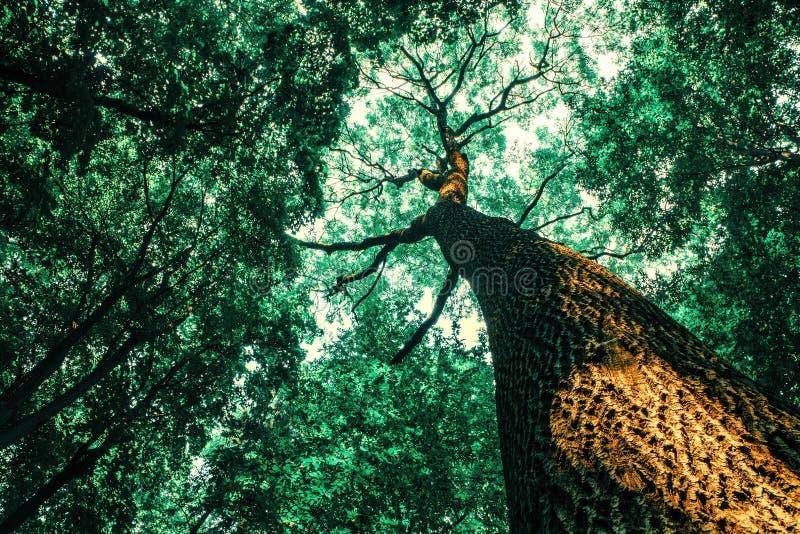 Träd för en vårskog wood solljusbakgrunder för natur arkivfoto