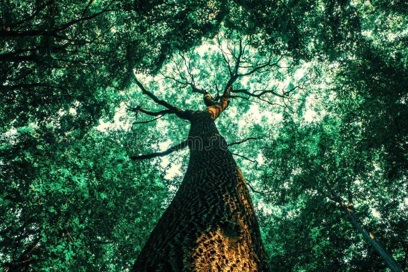 Träd för en vårskog wood solljusbakgrunder för natur royaltyfri bild