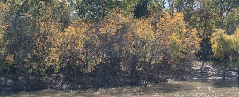 Träd för färg för lövverk för nedgång för flodstrand för panoramasikt härliga vibrerande i förorts- Dallas, Texas, USA arkivbild