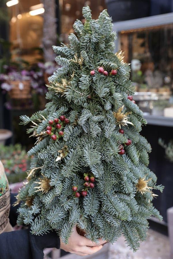 Träd för jul för vinterdekor mini- i blomsterhandlares händer royaltyfri fotografi