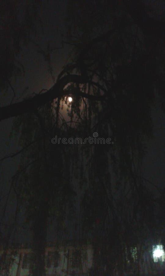 Träd för måneljus arkivfoto