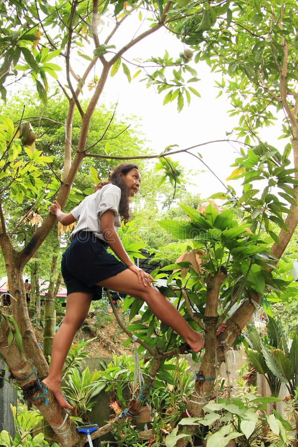 Träd för mango för Papuanflickaklättring royaltyfri fotografi