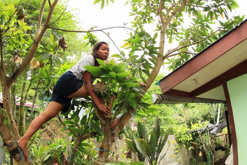 Träd för mango för Papuanflickaklättring arkivfoto