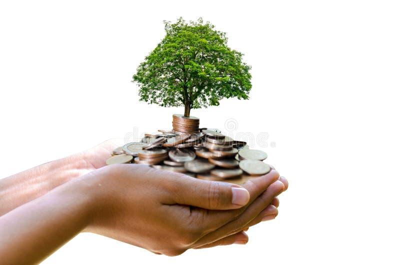 Träd för mynt för hand för isolat för handträdmynt som trädet växer på högen Besparingpengar inför framtiden Investeringidéer och arkivfoton