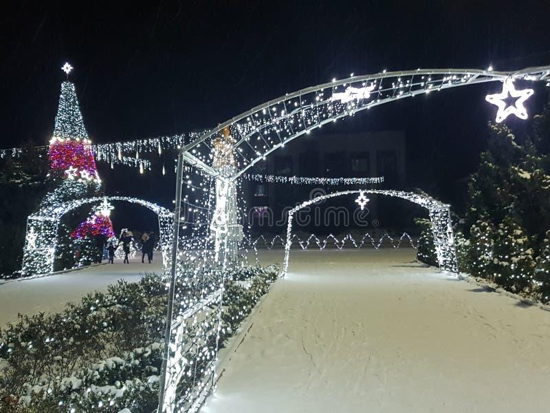 Träd för nytt år och christmass royaltyfri foto