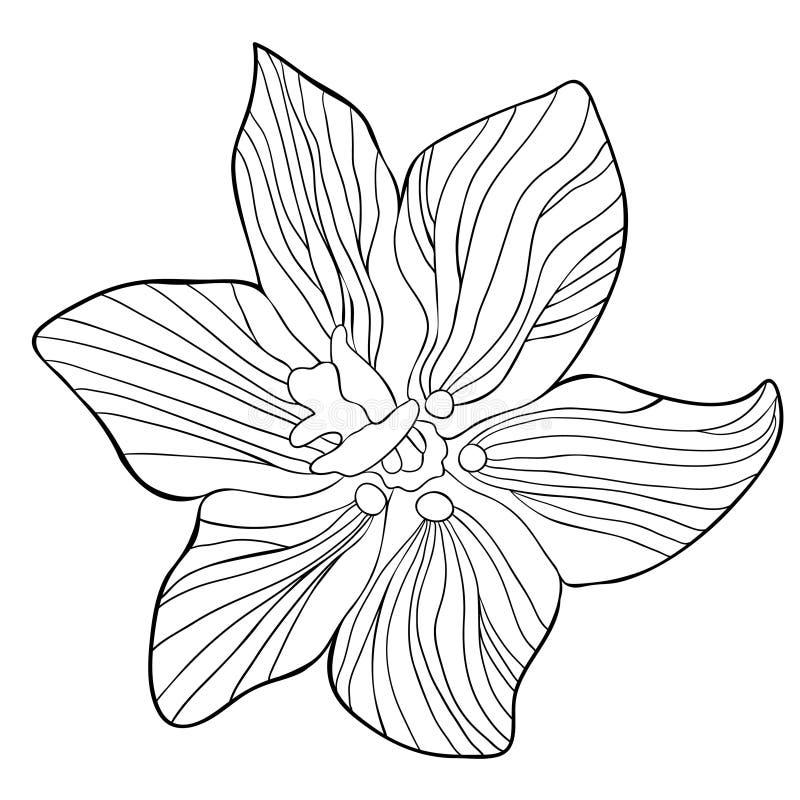 Träd för paradis för blomma för färgläggningFritillariaimperialis Vektor il vektor illustrationer