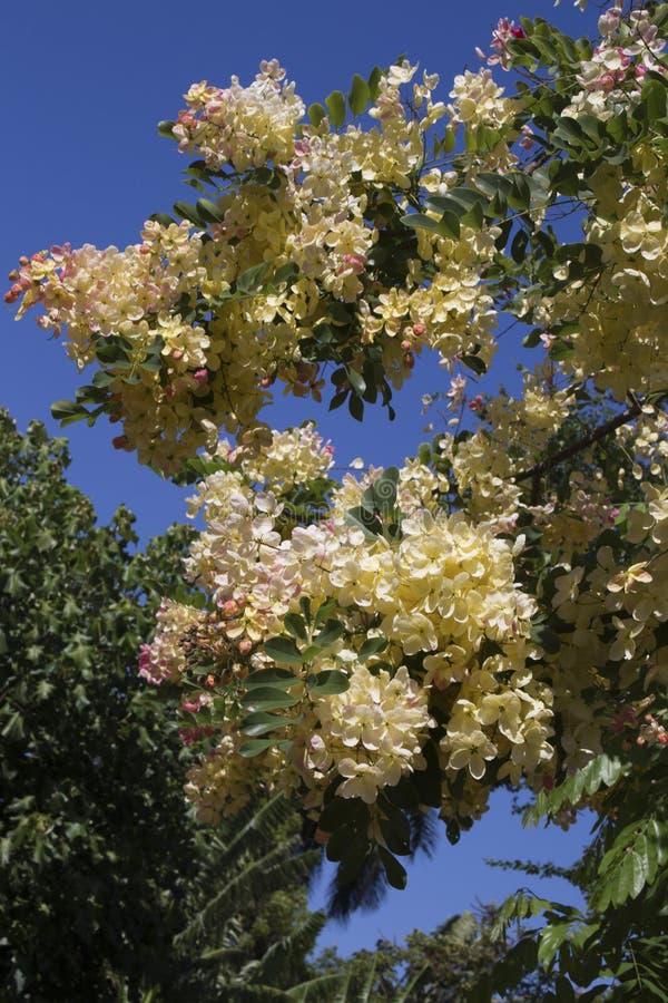 Träd för regnbågedusch arkivbilder