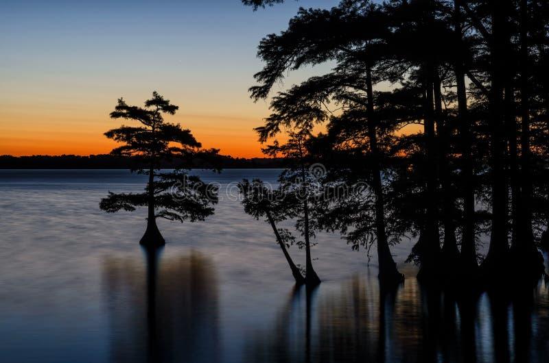 Träd för skallig cypress, Reelfoot sjö, Tennessee State Park arkivfoto