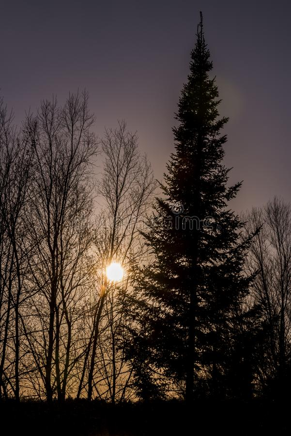 Träd för solnedgångdouglas gran royaltyfri fotografi
