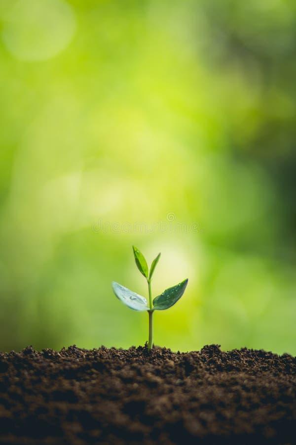 träd för ung växt för ํ i natur royaltyfria bilder