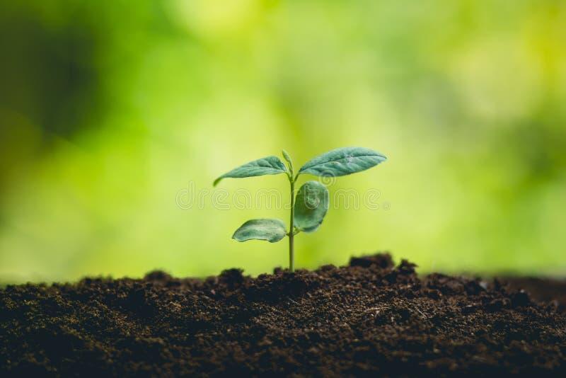 träd för ung växt för ํ i natur royaltyfria foton